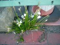 路傍の花(筆者撮影)